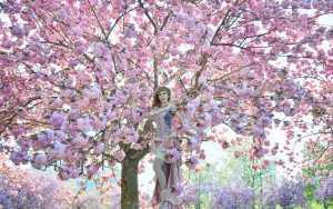 Kirchblüten in Szene setzen