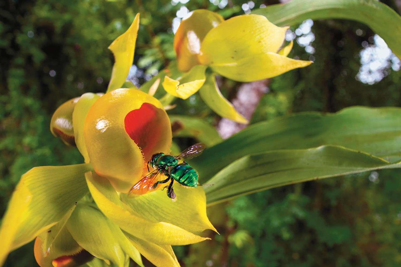 """Christian Ziegler Fotoschau """"Wilde Orchideen"""", GEO präsentiert OPEN-AIR auf dem Postplatz Zingst"""