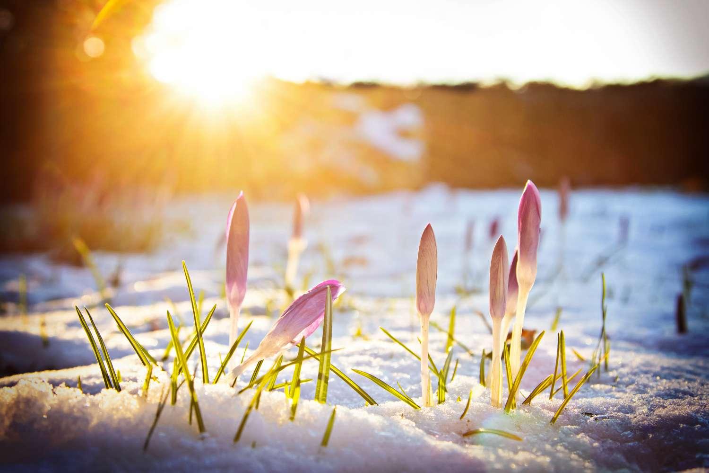 Leserwettbewerb der winter geht der fr hling kommt for Bilder fruhling