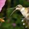 Summ summ summ… Fotowettbewerb des Deutschen Bienen-Journals
