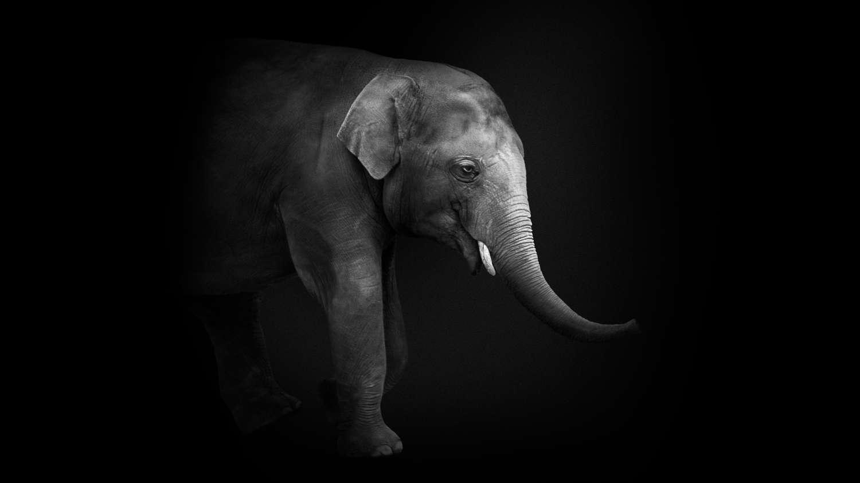 mandykarlowski-elephant-love