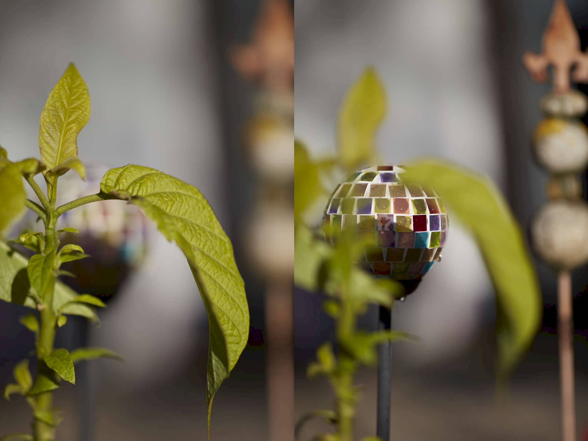 Bei Offenblende ist die Schärfentiefe so gering, dass selbst das Freistellen nahe beieinanderliegender Objekte mühelos gelingt. Das Bokeh ist weich und harmonisch.