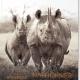 Mondberge-Magazin zeigt Wege in die Zukunft und vollzieht Brückenschlag zwischen Tradition und Zukunft
