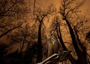 """Fotoausstellung """"Wildnis hautnah"""" AUS Waldbewohner ©Klaus Echle"""