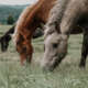 Fotowettbewerb Tiere