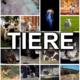 Fotowettbewerb Tiere – Die Einsendungen
