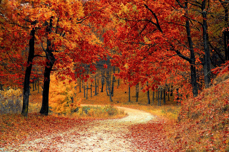 Dieser Herbstwald bietet sich perfekt für ein Bild in einem Farbton an