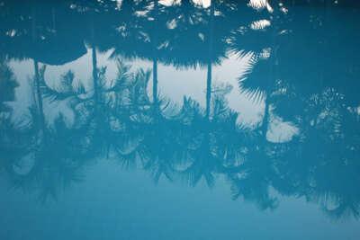 Blau in verschiedenen Helligkeiten trifft hier auf eine spannende Bildidee: Die Palmen spiegeln sich im glatten Wasser.